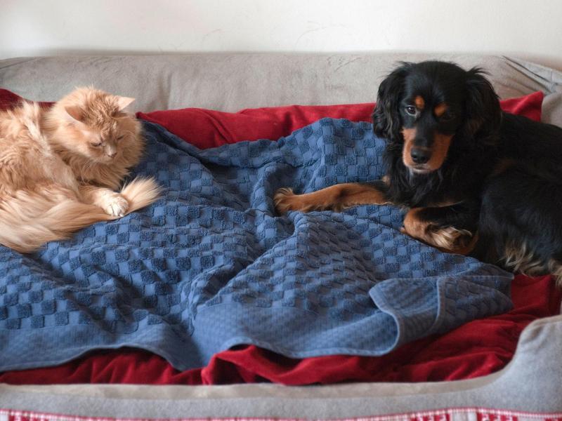 Bild zu Katze und Hund