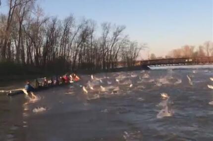 Flugshow Karpfen attackieren Ruderboot