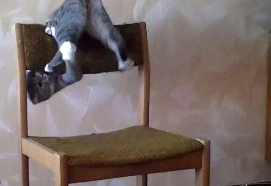 Bild zu Katze, Stuhl