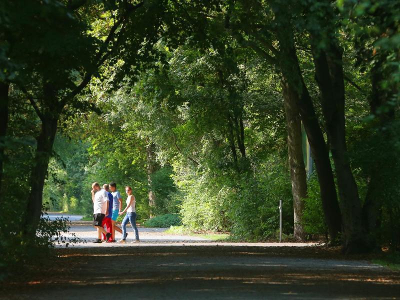 Bild zu Spaziergang in der Hasenheide