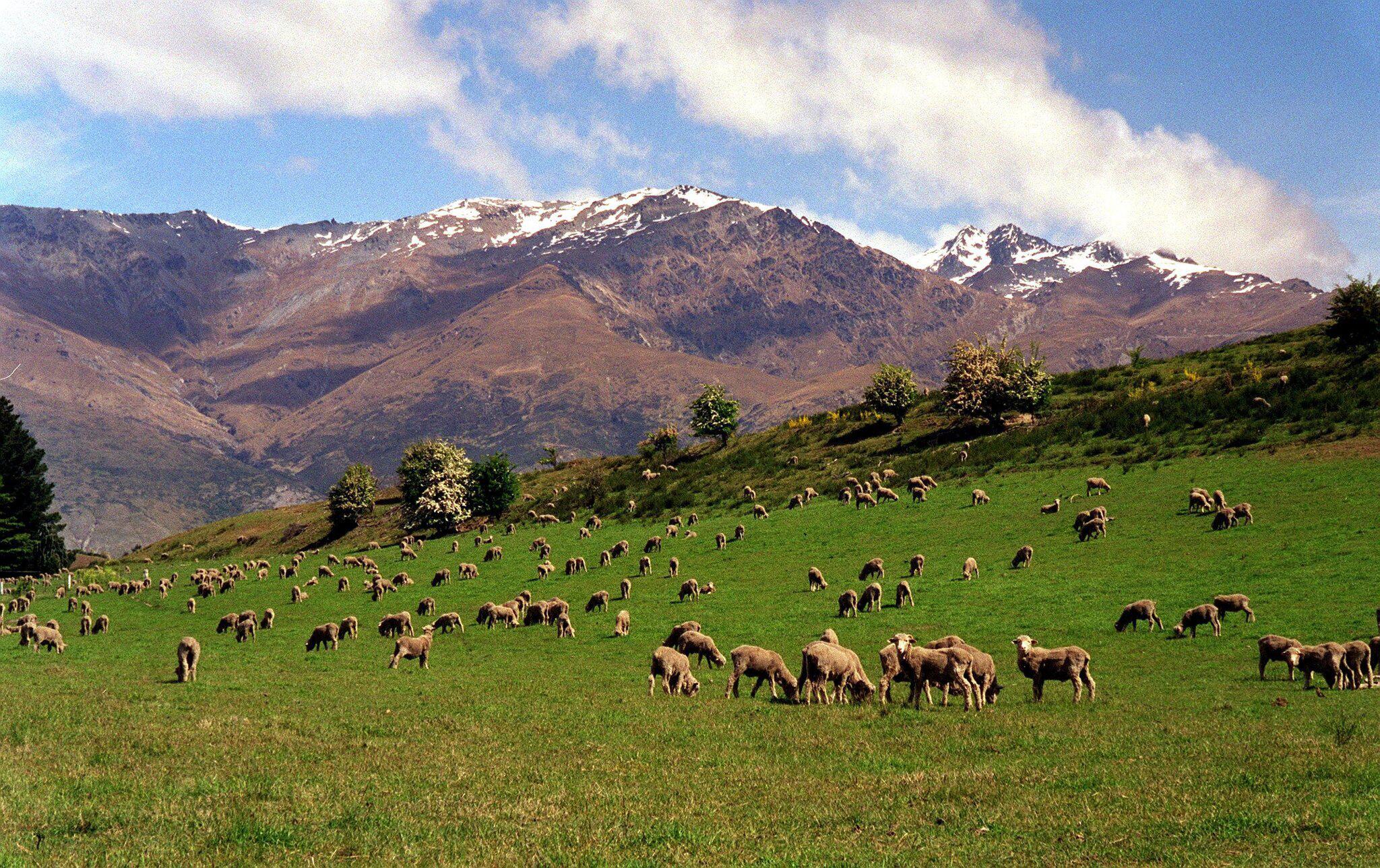 Bild zu Neuseeland
