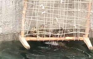 Leopard wird gerettet