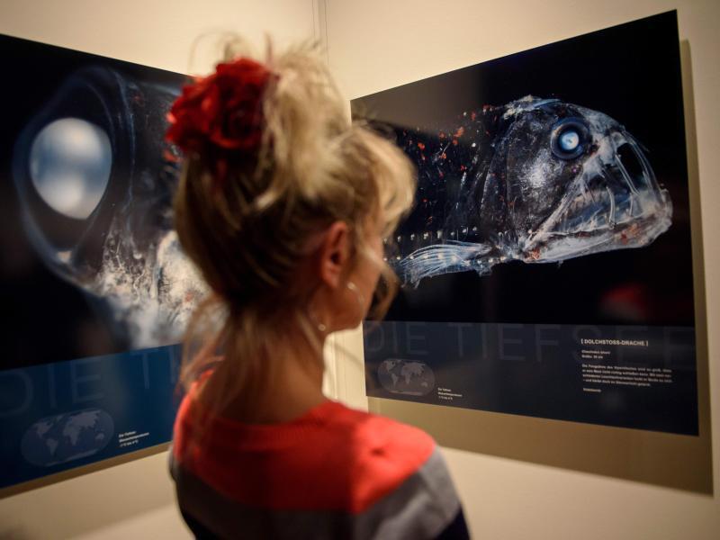 Bild zu Vipernfischfotografiebetrachterin
