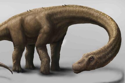 schwerster Dino