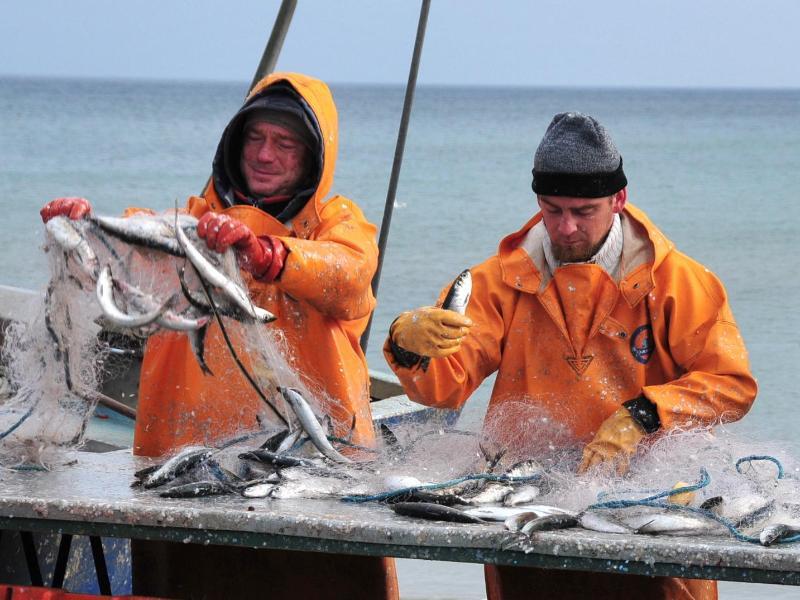 Bild zu Fischer auf Rügen