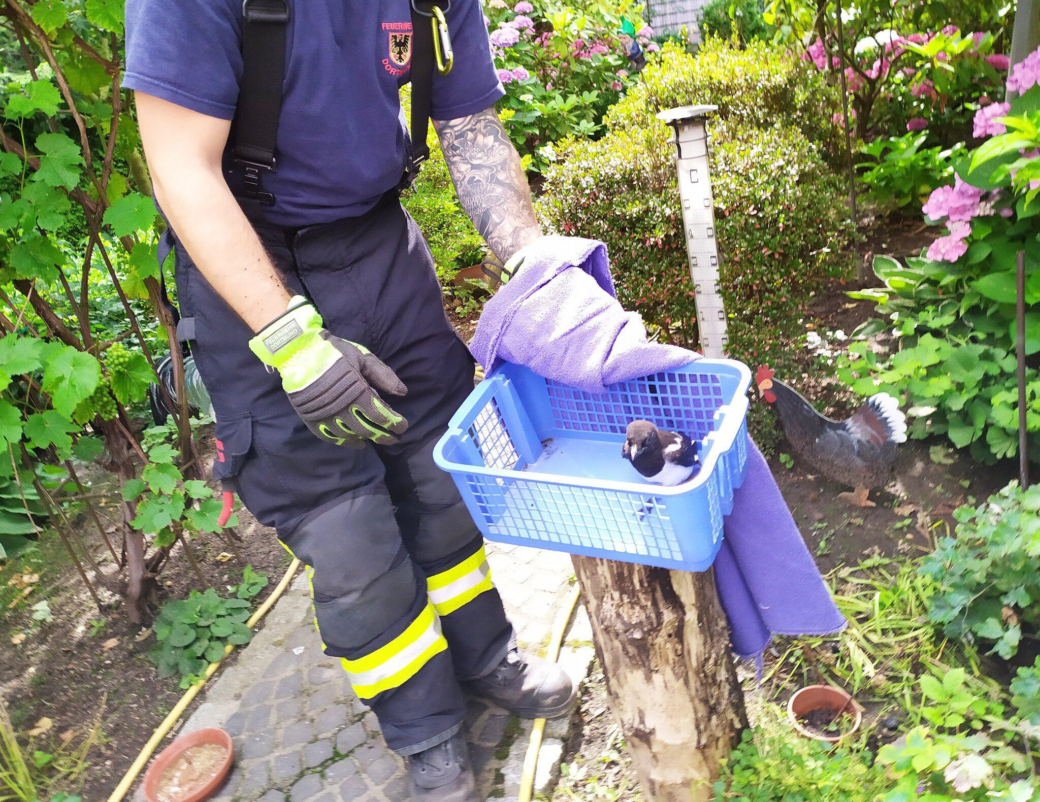 Bild zu Feuerwehr rettet junge Elster aus Kamin