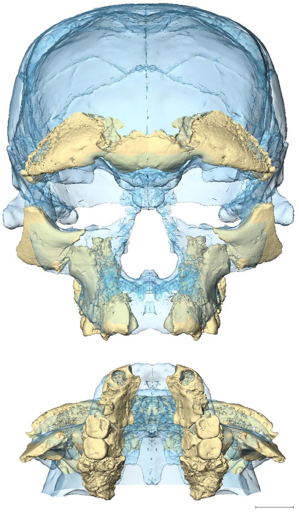 Homo sapiens älter als gedacht
