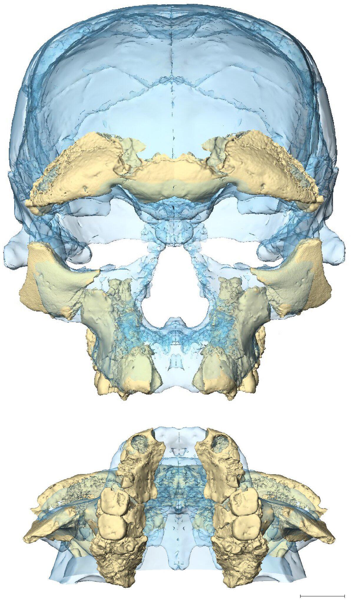 Bild zu Homo sapiens älter als gedacht