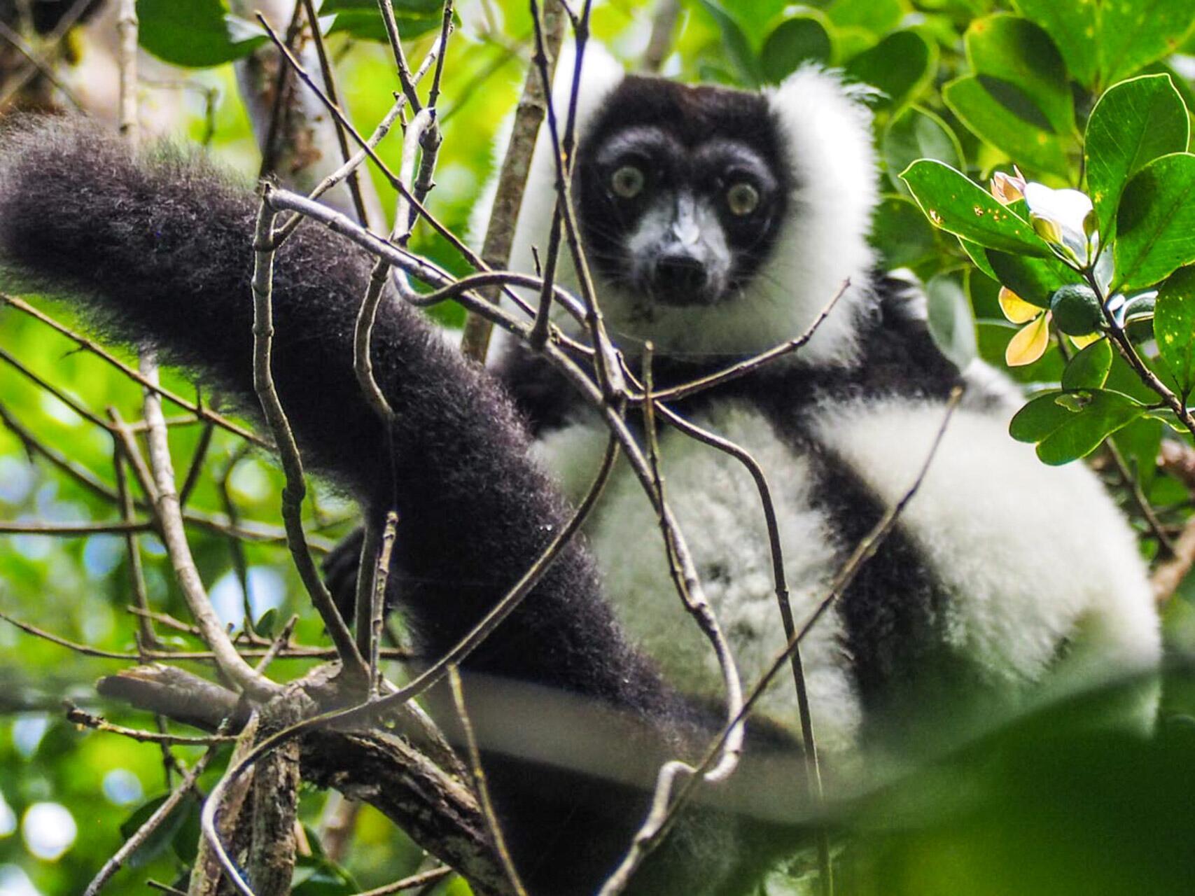 Bild zu Madagaskar