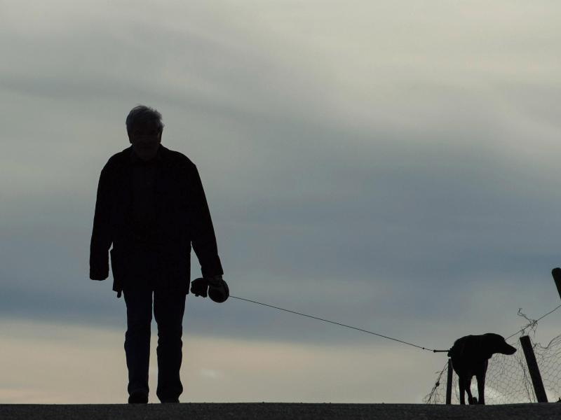 Bild zu Spaziergang mit Hund