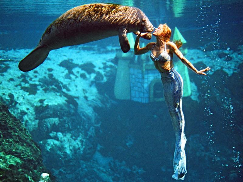 Bild zu Seekuh und Meerjungfrau