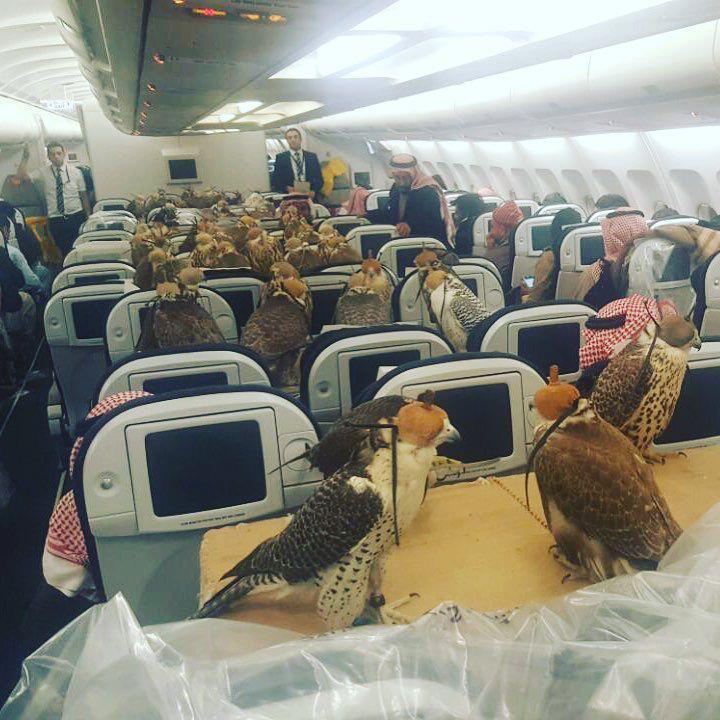 Bild zu Falken im Flugzeug