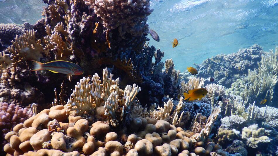 Drohende Ölpest im Roten Meer