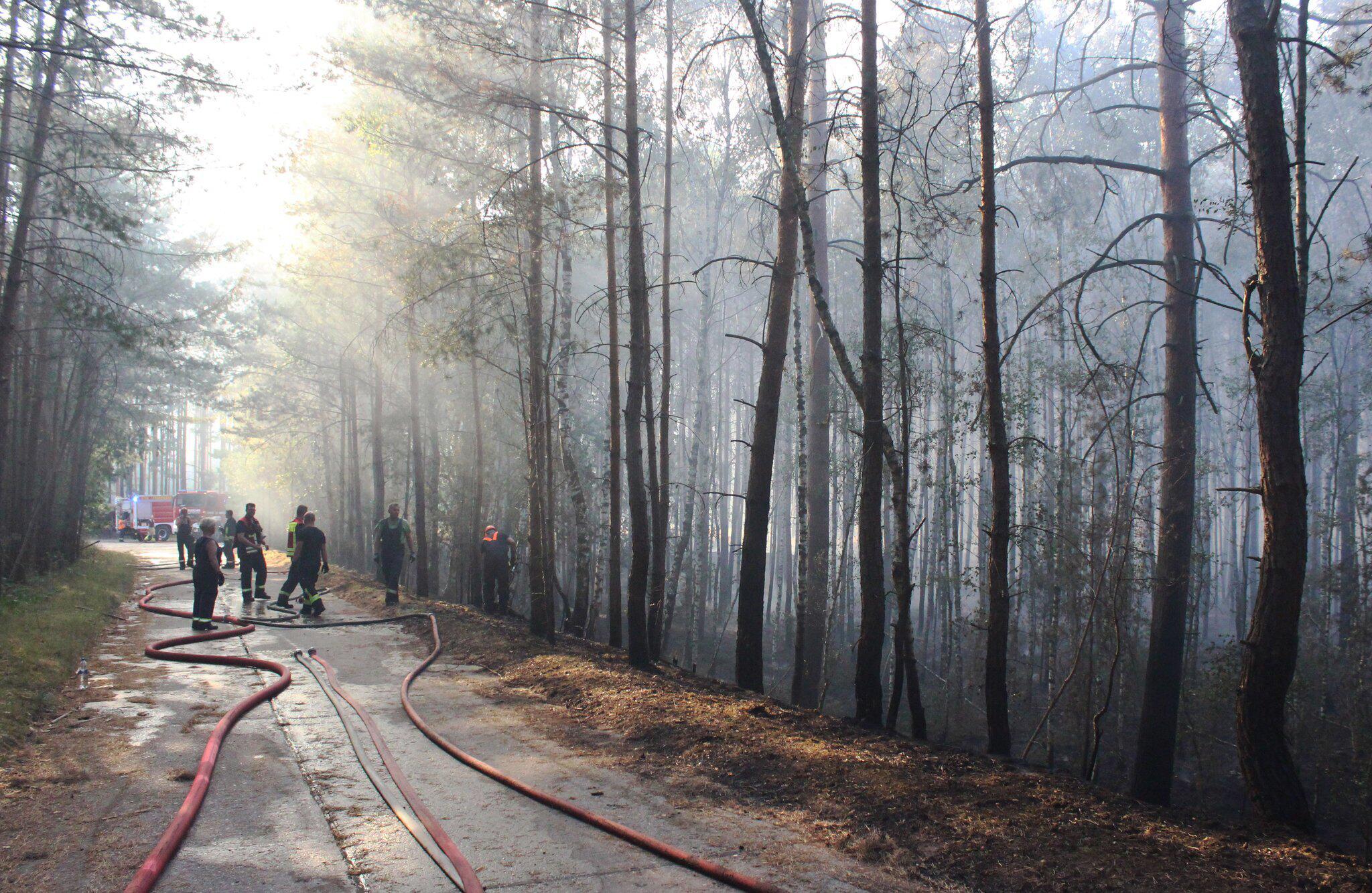 Bild zu Großer Waldbrand bei Potsdam