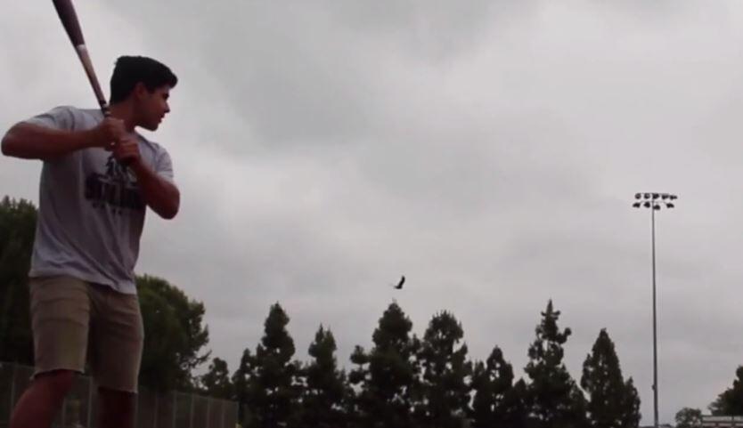 Bild zu Vogel, Baseball
